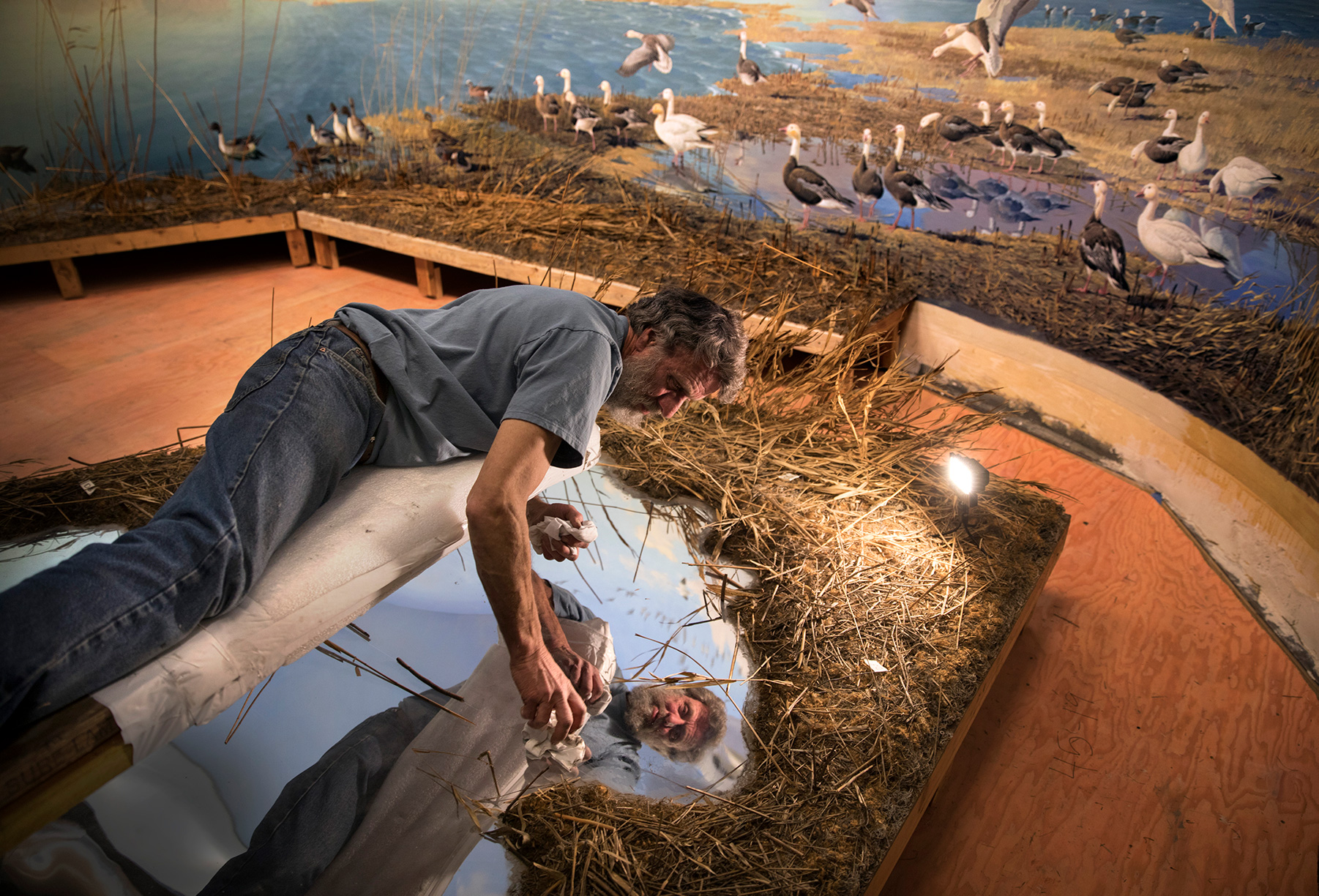 """Terry Brown polishes the chrome-plated """"lake"""" in the Bell Museum's famous Snow Geese diorama."""