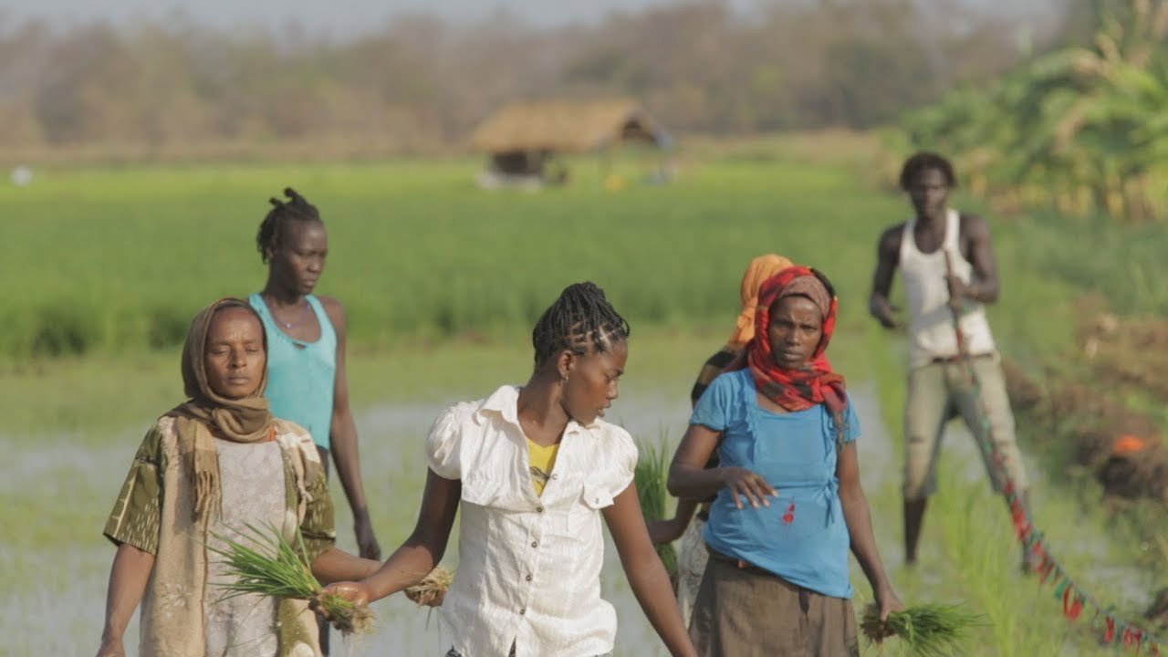 Still image of African farm fields from the film Dead Donkeys Fear No Hyennas
