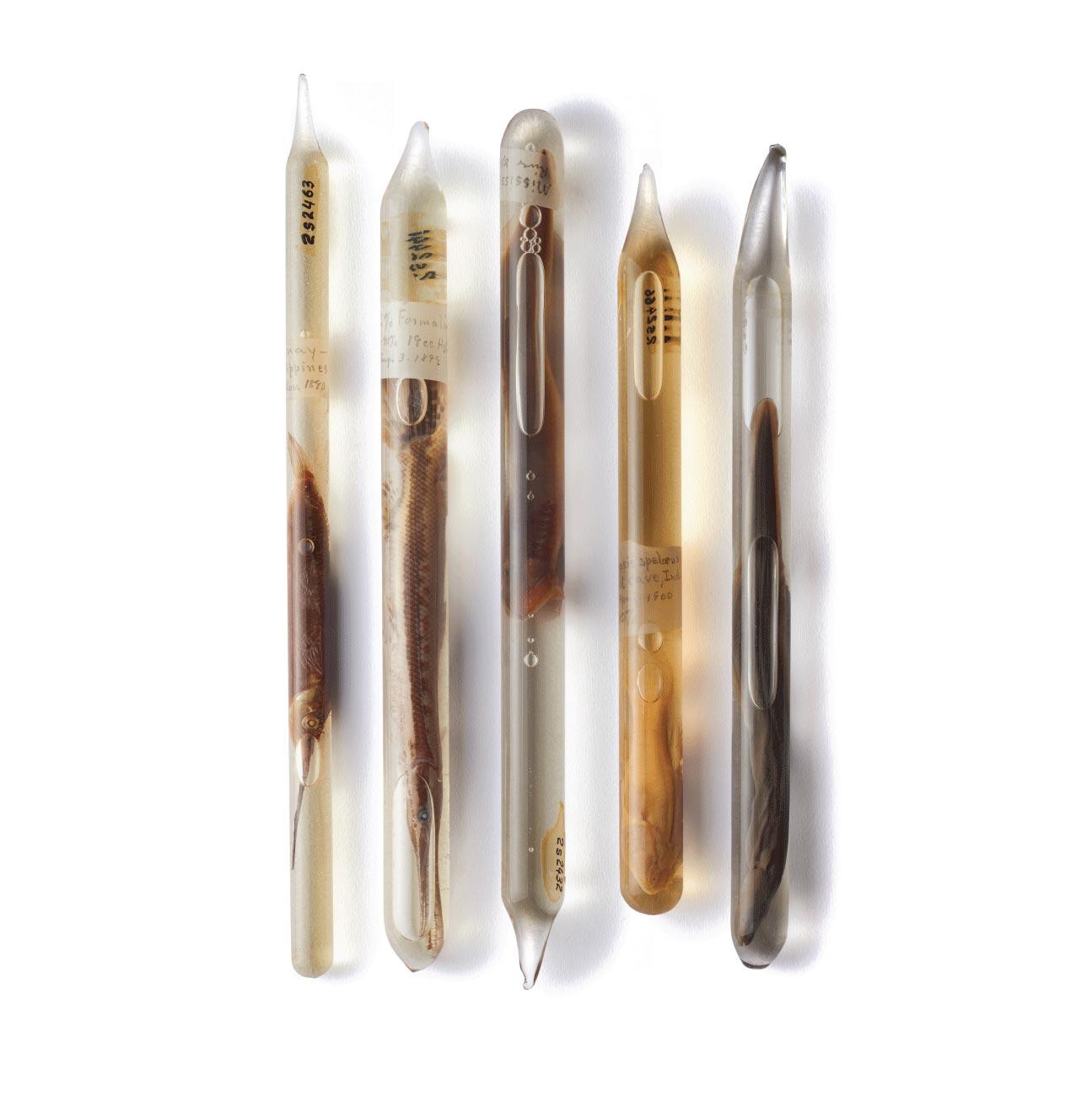 Sealed glass vials containing fish specimens