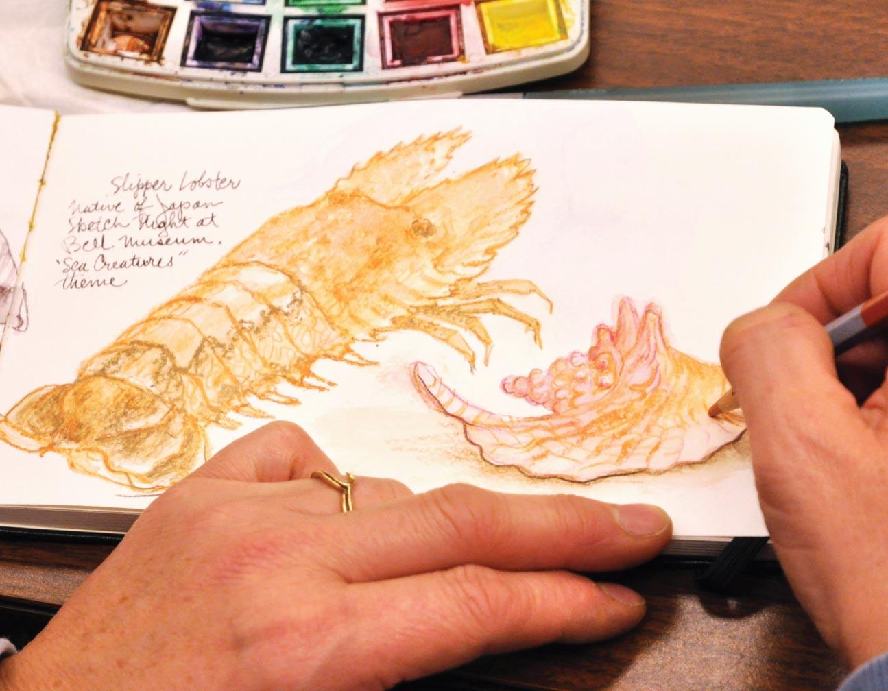Sketch of a slipper lobster