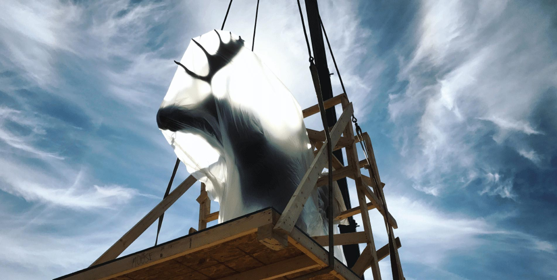 Taxidermied moose being craned into the new museum
