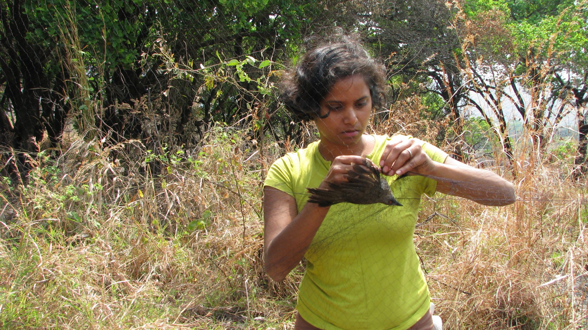 Dr. Sushma Reddy in the field, recovering a live bird for research