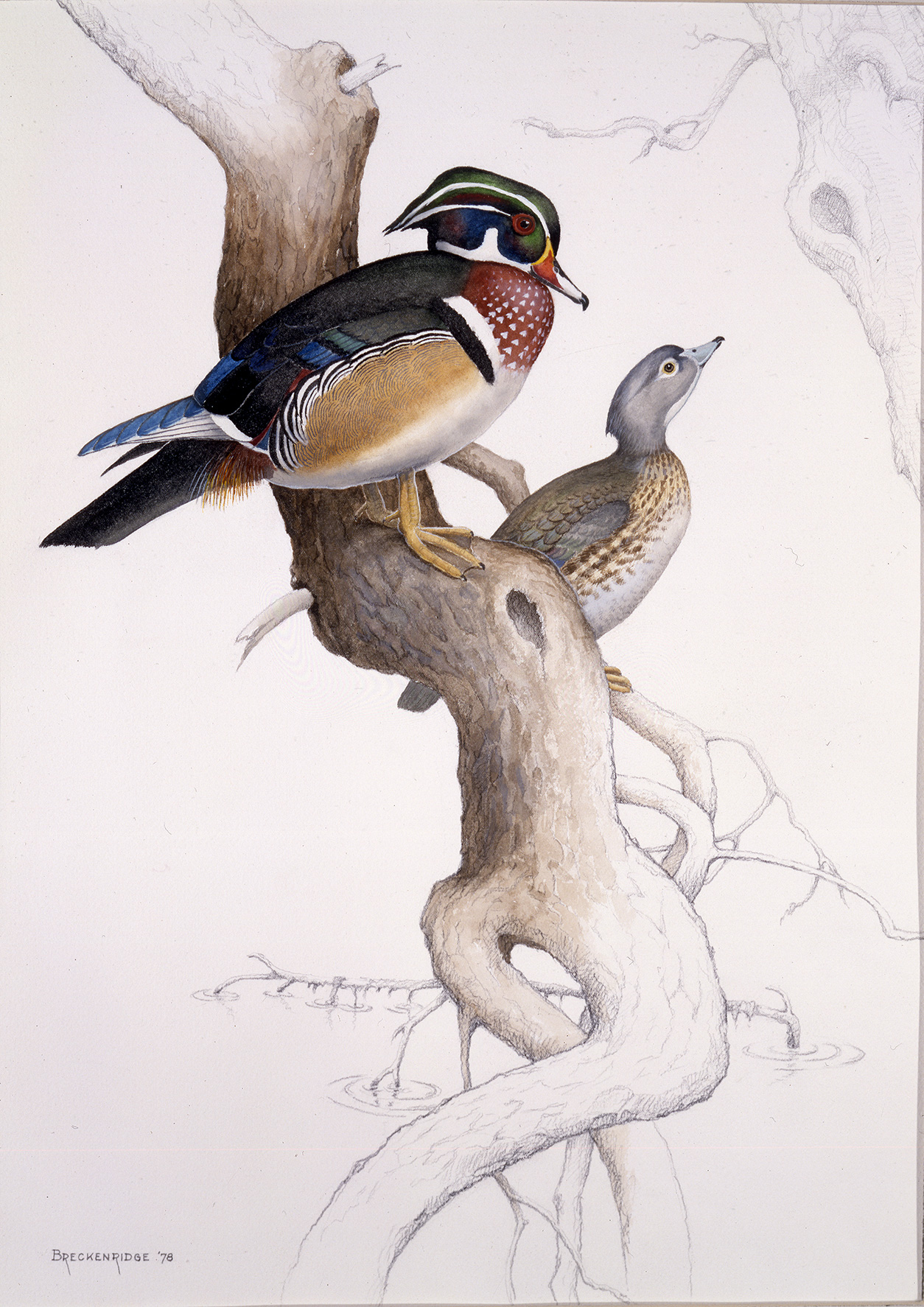 Breckenridge Wood Duck art