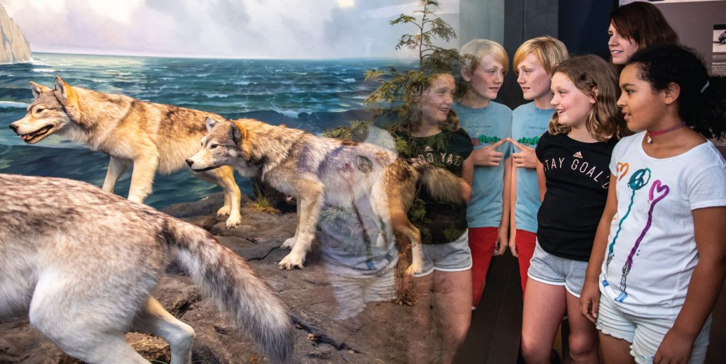 Visitors looking at the wolf diorama