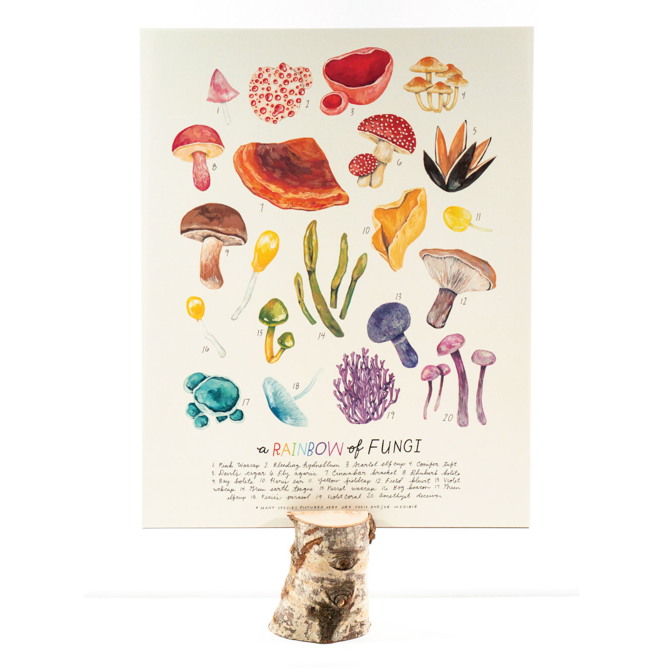 Rainbow of Fungi poster available in the shop.