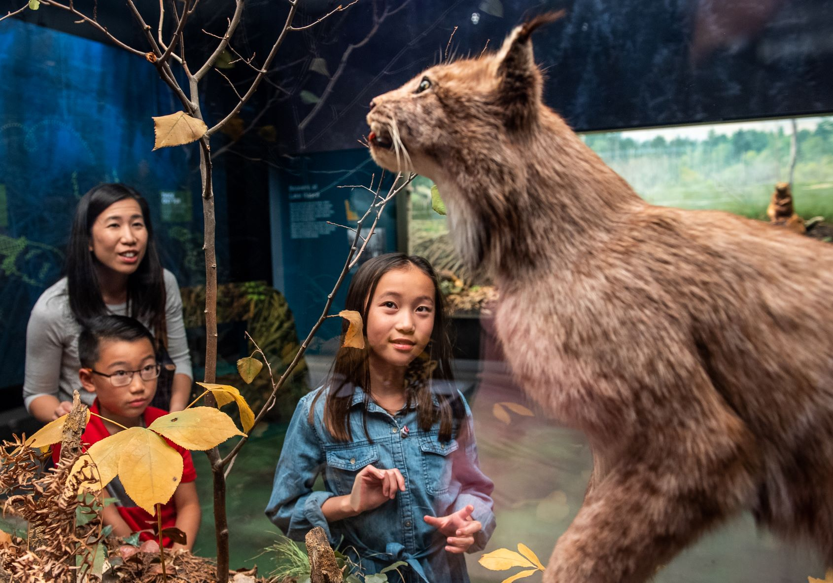 Family looking at Lynx diorama