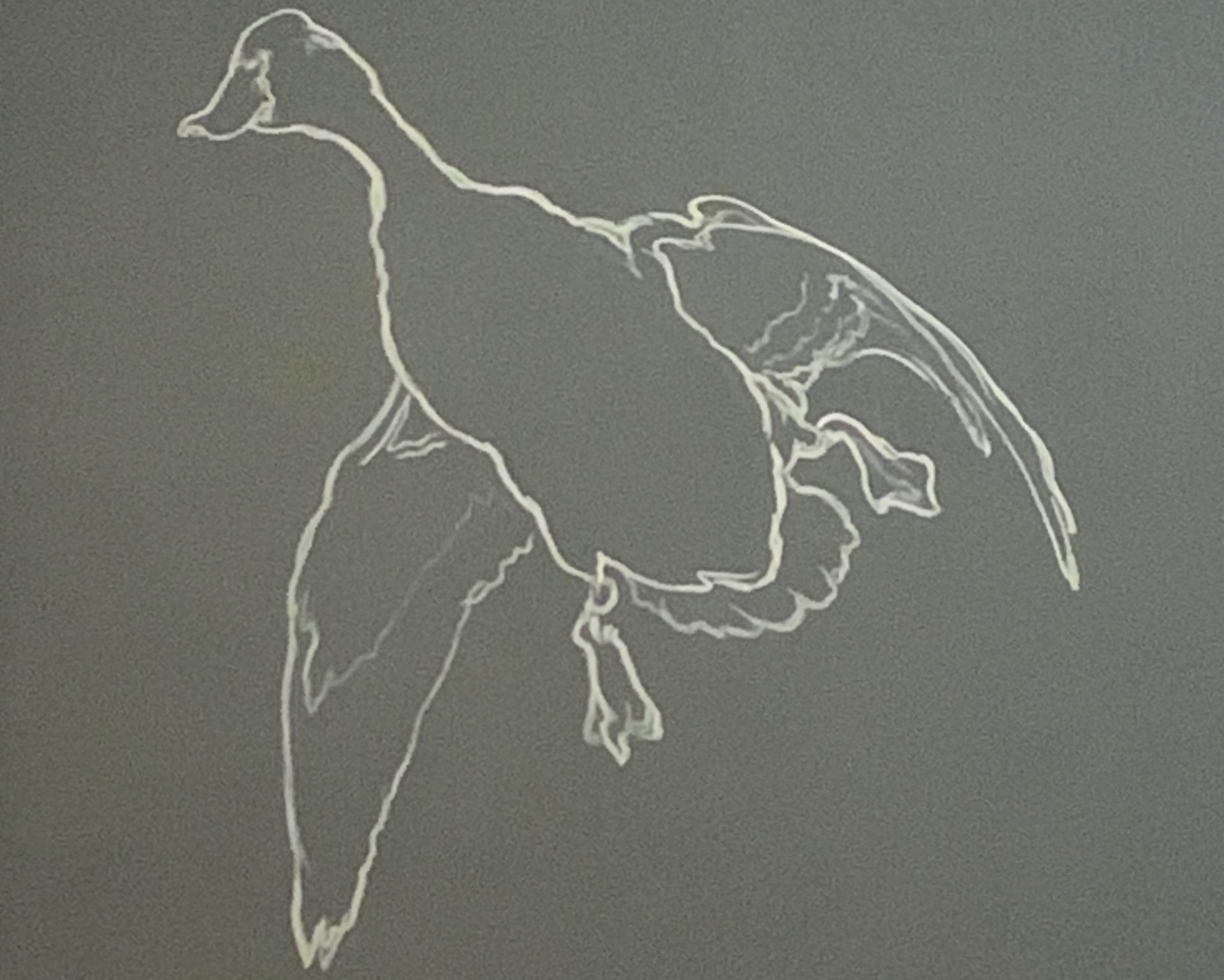 artistic rendering of black duck in flight in the style of field notes on the bell museum wall