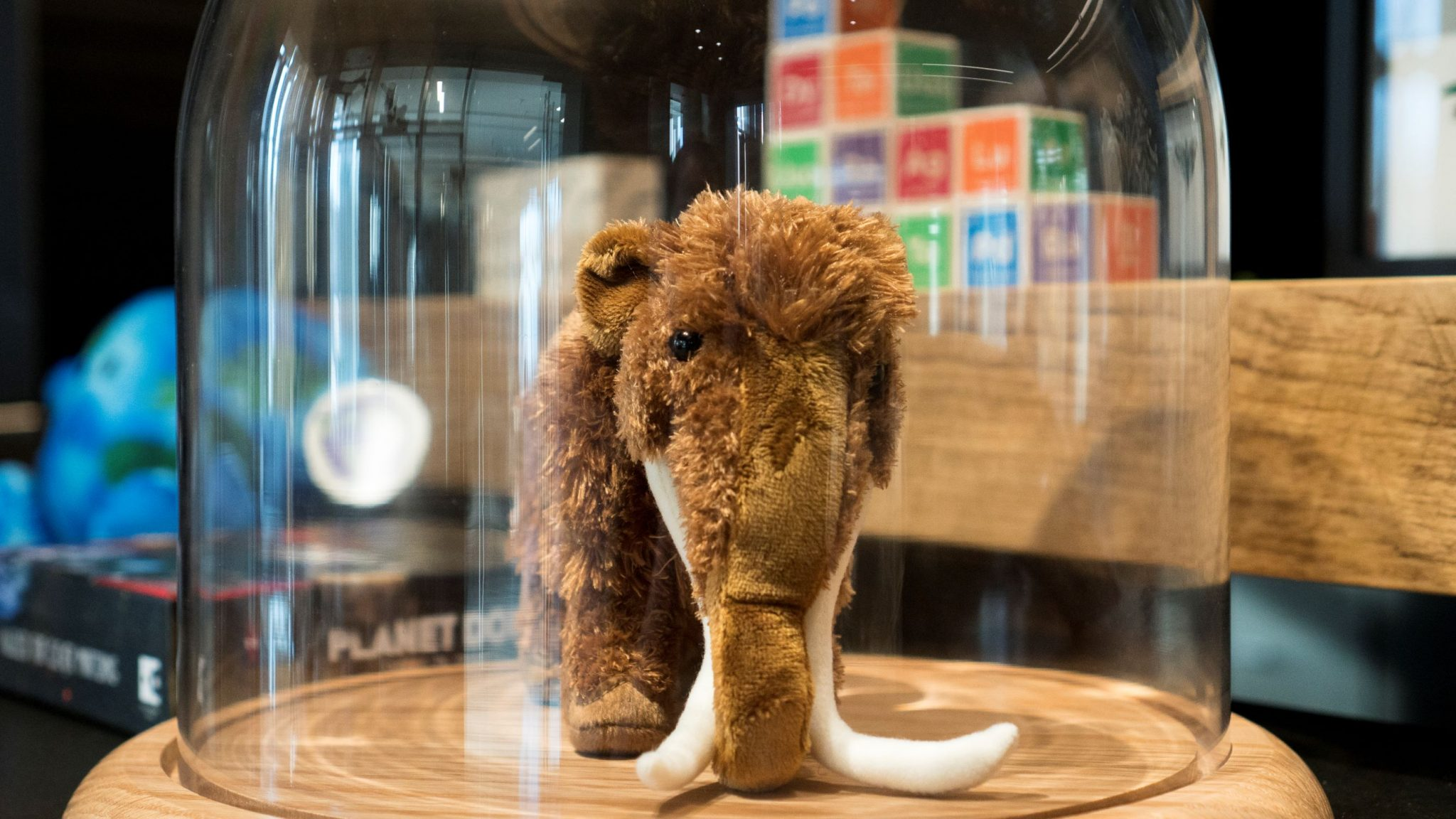 Plush mammoth in the Curiosity Shop