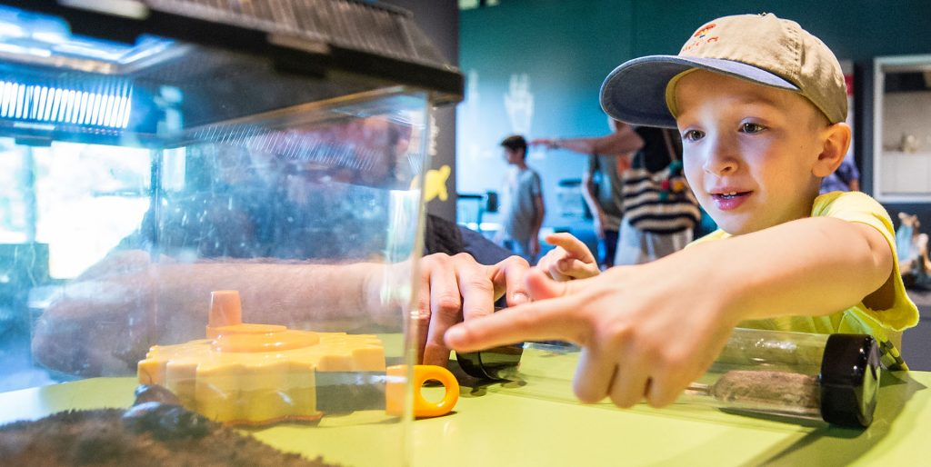 A young boy points at a cockroach in a terrarium