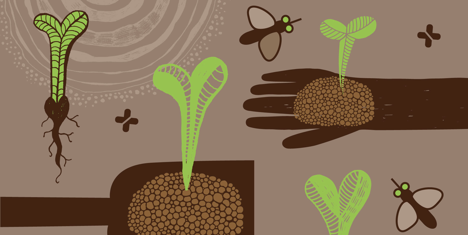 Illustration of seedlings, soil, insects and sun