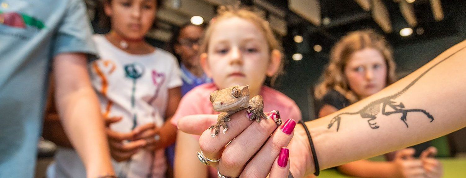 Kids look at a gecko someone is holding to show them