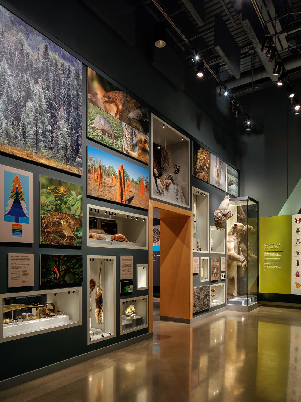 The Bell Museum's diversity wall, including a variety of natural specimens, with a polar bear anchoring one end