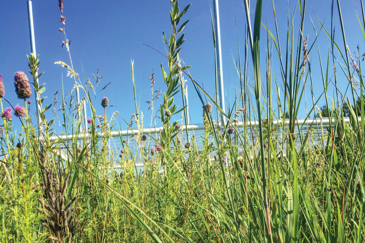 Wild grasses and flowers at the science reserve.