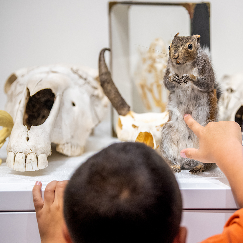 A child points at a squirrel specimen next to a large skull