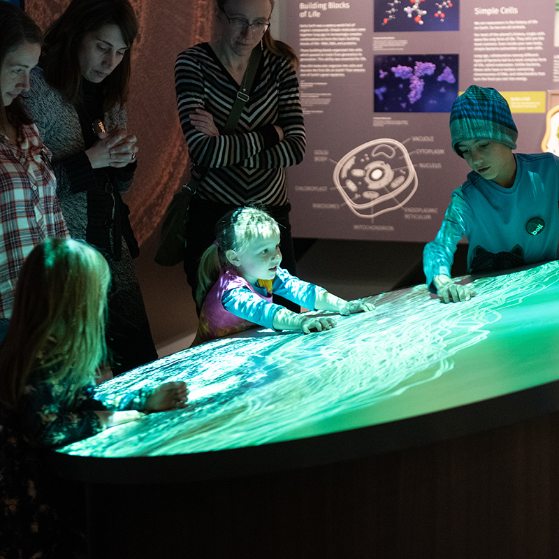 Some children look at a display in a Bell Museum gallery
