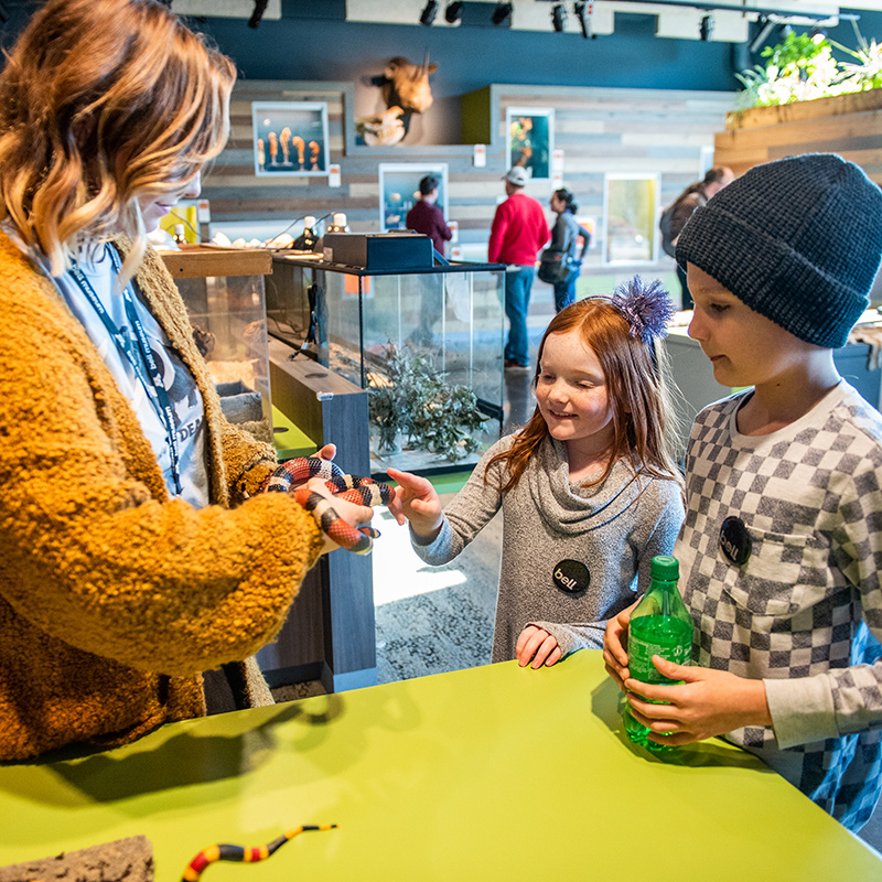 Kids pet a snake in the Bell Museum's Touch & See Lab