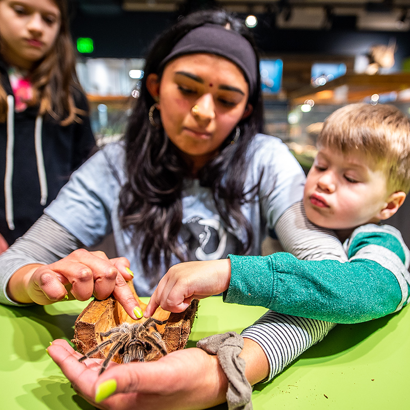 A boy pets a tarantula held by a volunteer in the Touch & See Lab