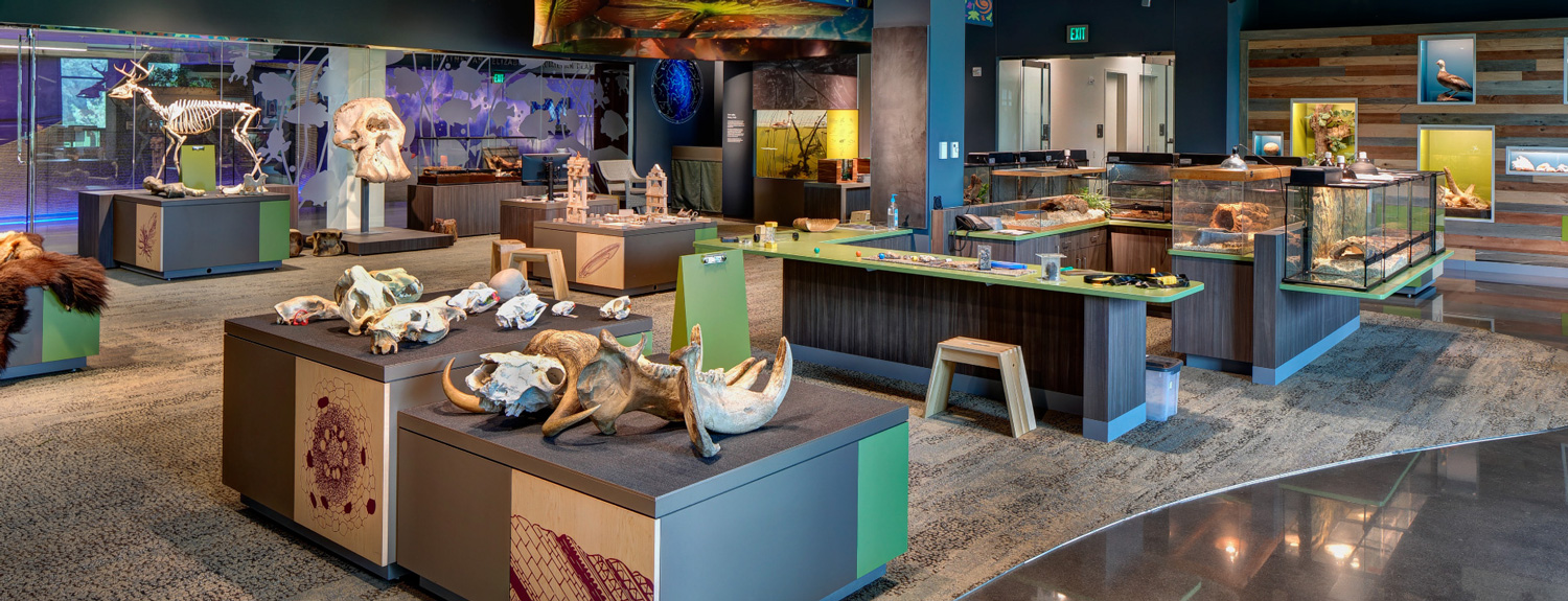 The Bell Museum's Touch & See Lab