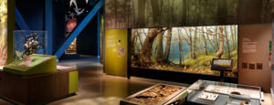 The Bell Museum's Big Woods diorama