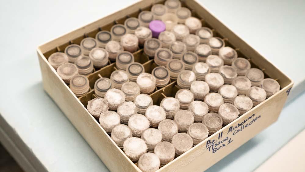 Frozen genetic resources tissue specimens