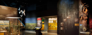 The Bell Museum's prairie discovery station