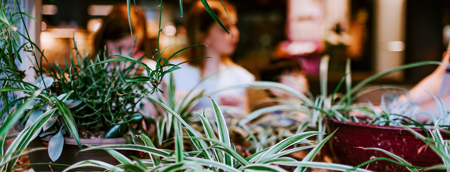 Close shot of spider plants in the foreground and blurred people in the background