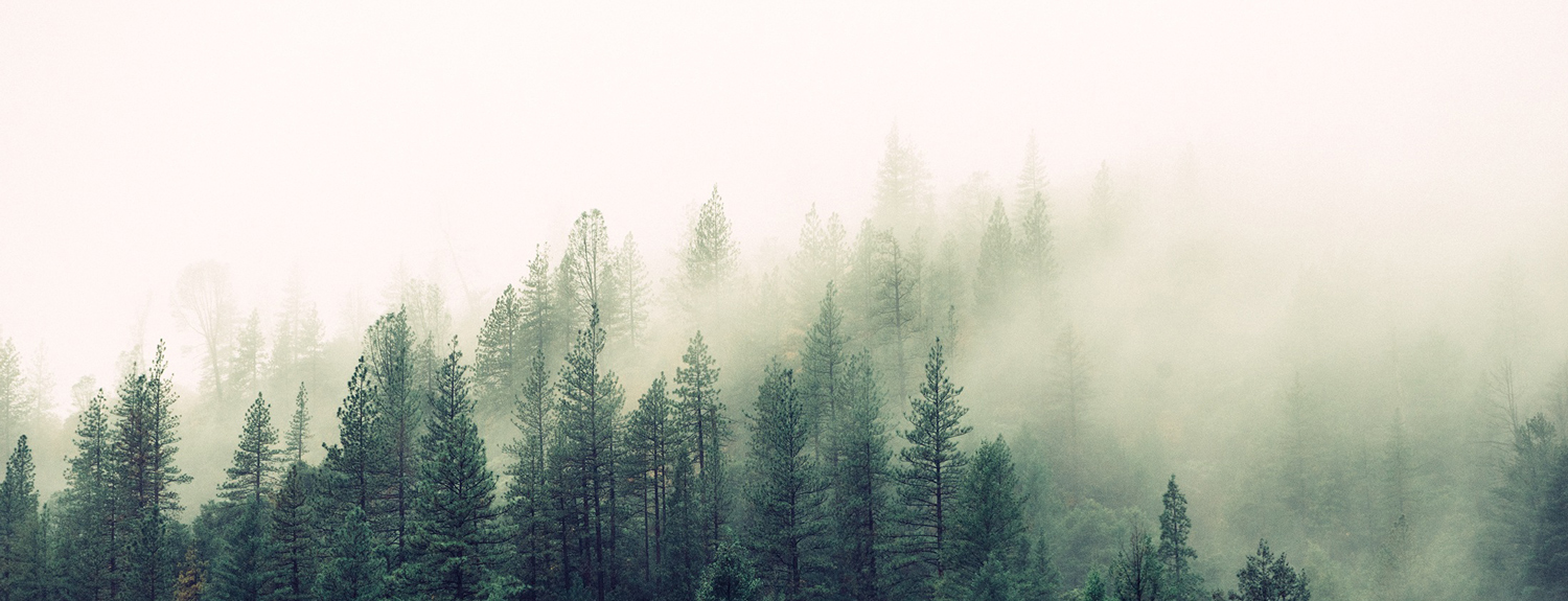 A forest with clouds in the treetops