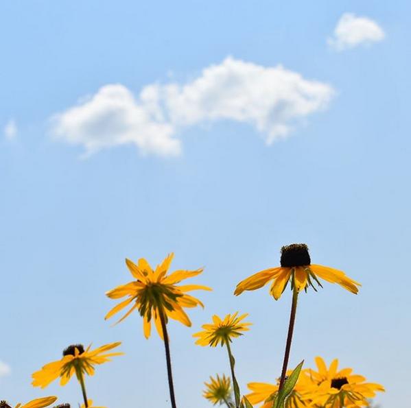 Wildflowers against blue skies