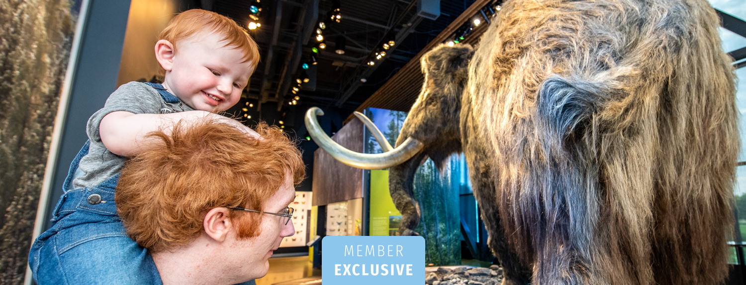 A baby and his father look at the woolly mammoth