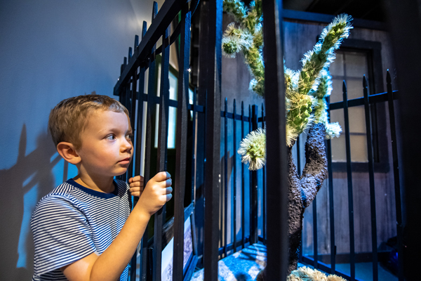 Visitors check out the Wicked Plants exhibit on opening weekend: A young boy looks at a cactus behind bars