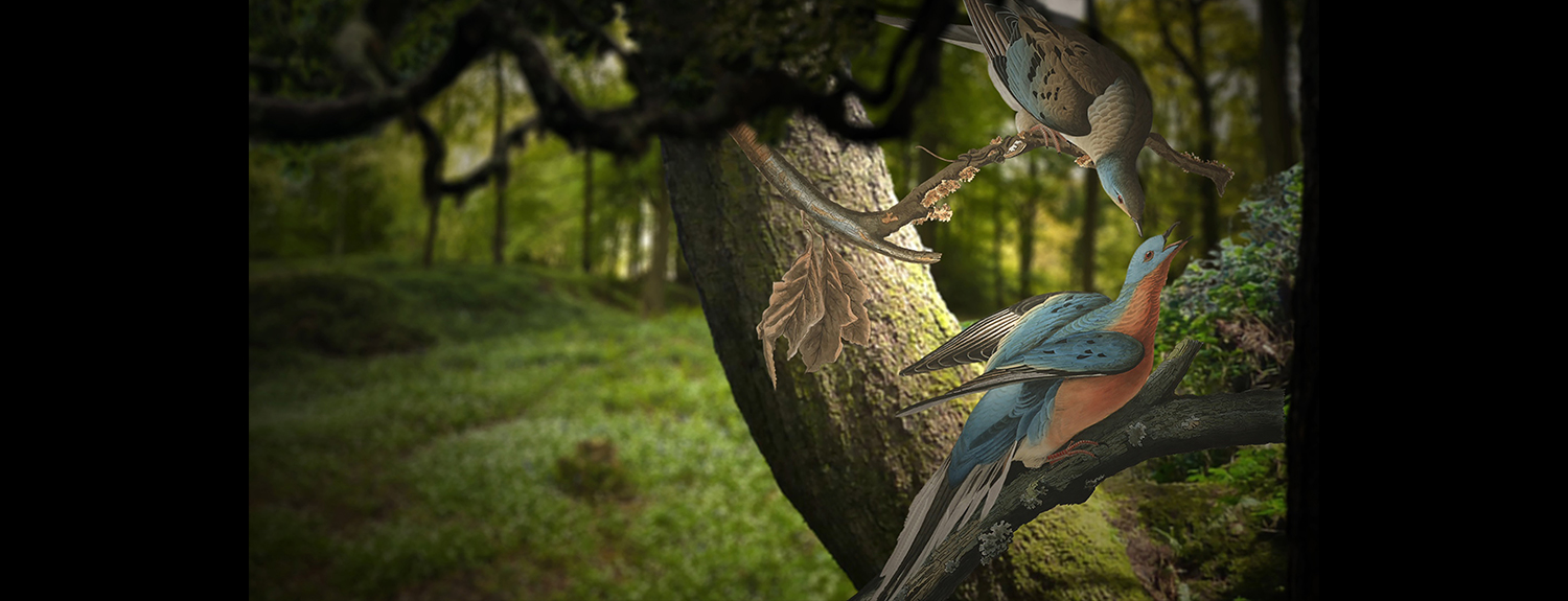 Image of birds from the Audubon Experience exhibit