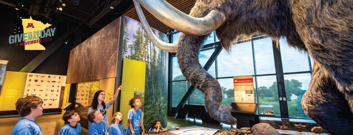 Group of students looking up at the woolly mammoth