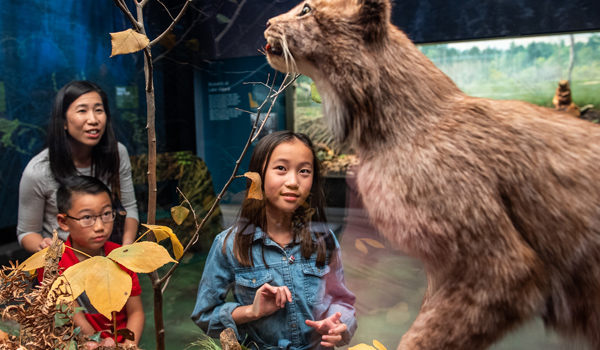 A woman and two children look at a lynx in a Bell diorama