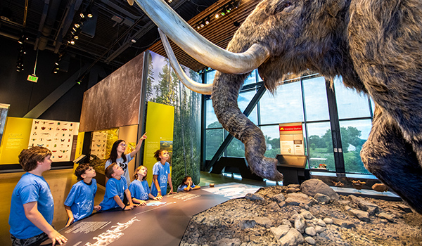 A group of children and an adult look at the woolly mammoth