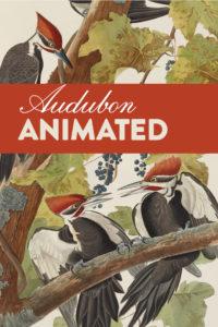 Audubon animated poster