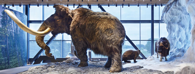 mammoth in Minnesota Journeys