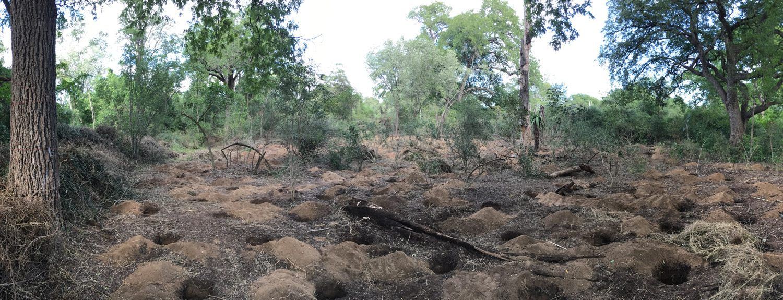 Madagascar dry forest ecosystem
