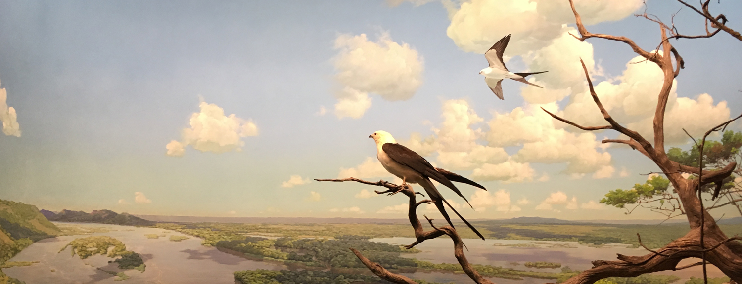 Detail from the diorama with kites