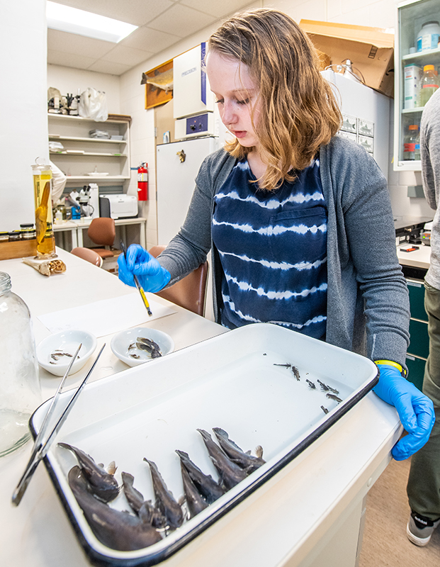 Student in the Bell fish collection