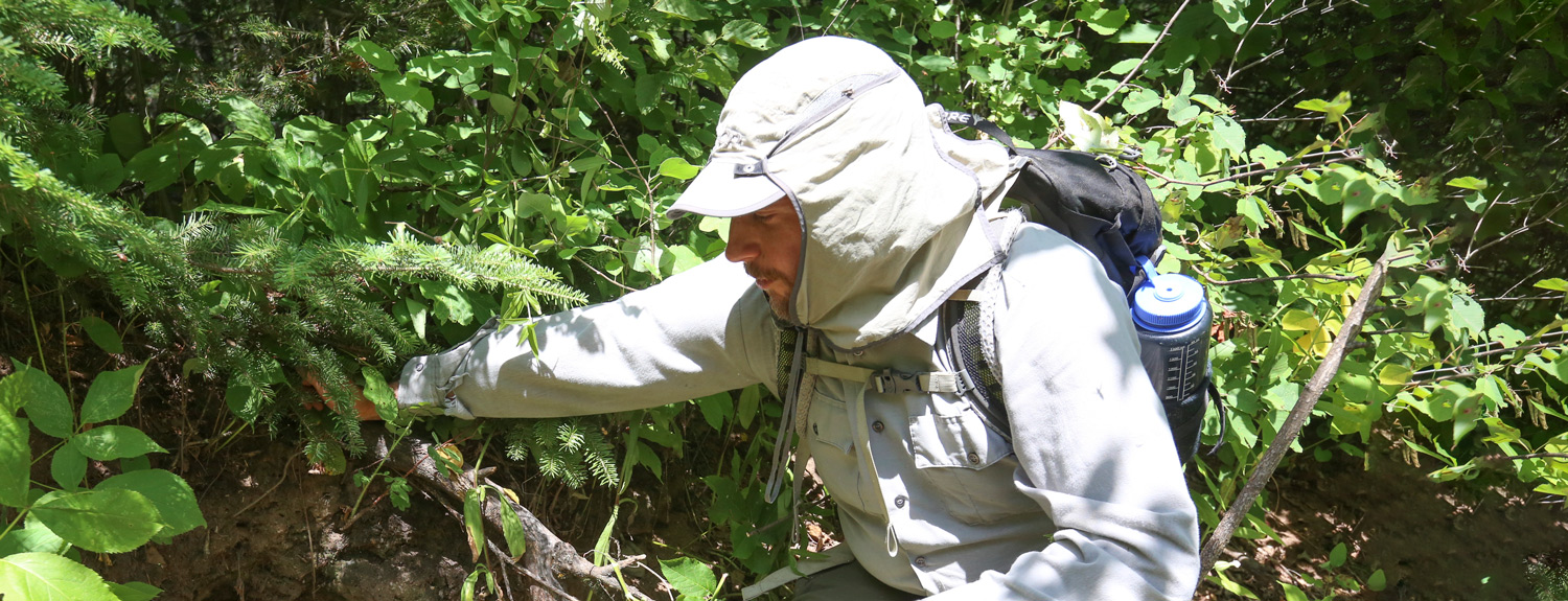 Tom Gable inspects an old wolf den (photo credit: Duluth News Tribune)