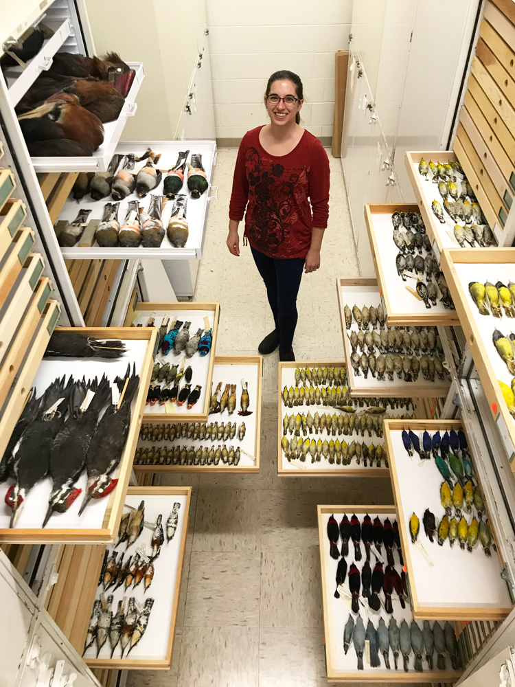 Hejmadi in the Bell's ornithology collection