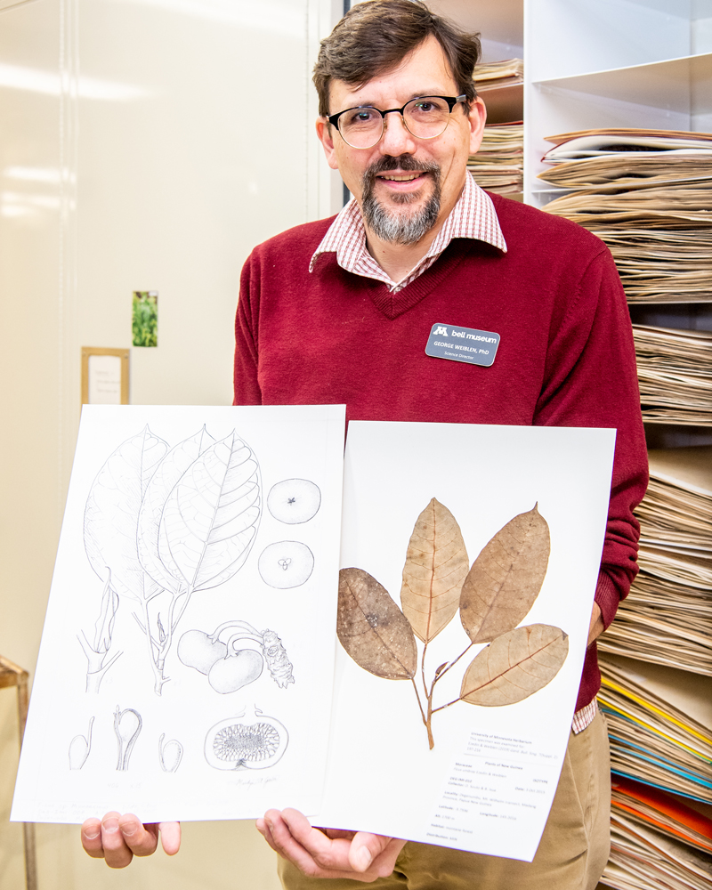 Weiblen displays the herbarium record