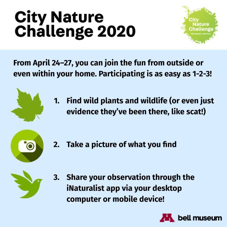 City Nature Challenge Instructions