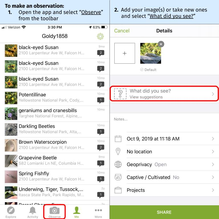 Navigating the iNaturalist app