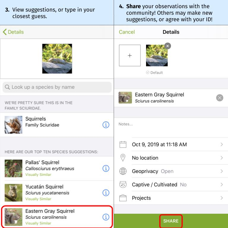 Submit an observation to iNaturalist screengrab