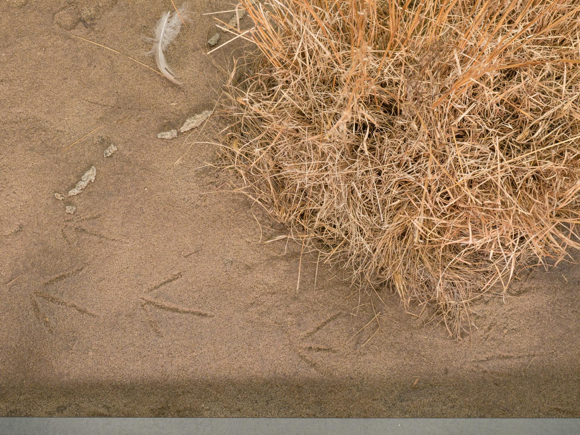 crane tracks