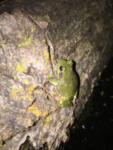 cute green frog sitting on a log.
