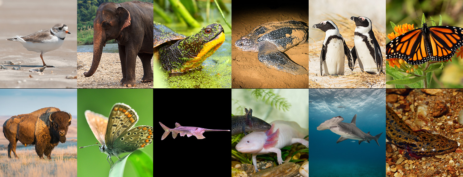 A collage of 12 animals