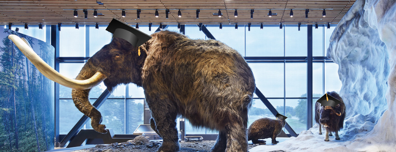 mammoth and musk ox in graduation caps from the glacier diorama