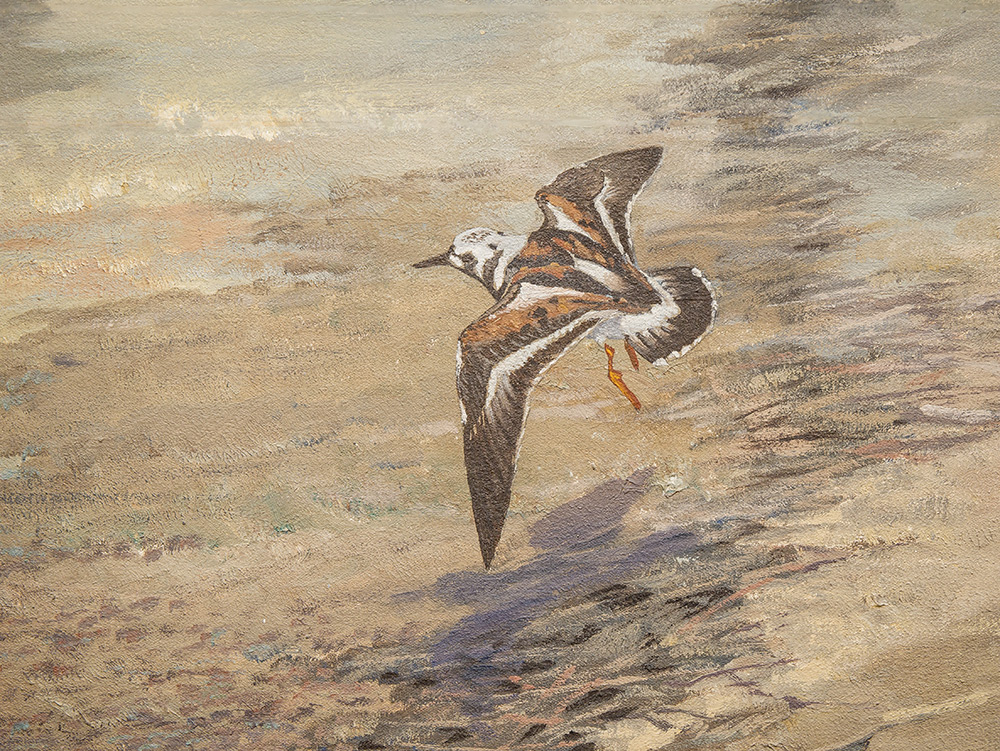 A shorebird painted on the background of the Lake Pepin diorama